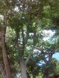 Linha de árvore Imagens de Stock