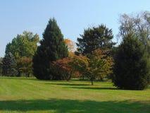 Linha de árvore Imagem de Stock Royalty Free