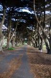 Linha de árvore Foto de Stock Royalty Free