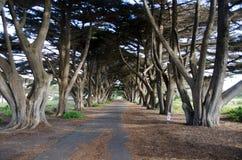 Linha de árvore Foto de Stock