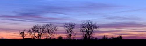 Linha de árvore crepuscular (panorâmico) Fotografia de Stock Royalty Free