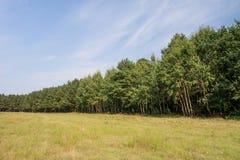 Linha de árvore na paisagem Fotografia de Stock