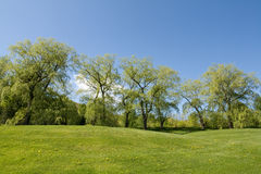 Linha de árvore no monte Imagens de Stock