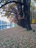 linha de árvore queda no parque fotografia de stock royalty free