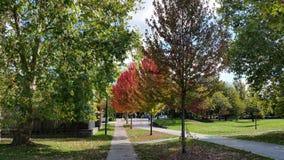 Linha de árvores Fotos de Stock Royalty Free