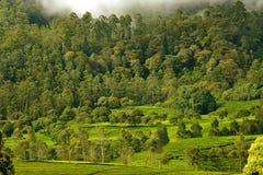 Linha de árvores Fotografia de Stock Royalty Free