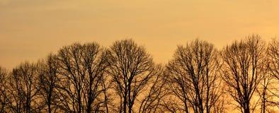 Linha de árvores despidas no por do sol Fotos de Stock Royalty Free