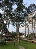 Linha de árvores no parque Foto de Stock Royalty Free