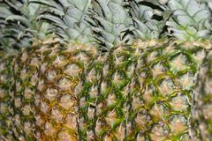 Linha de ananases fotos de stock royalty free
