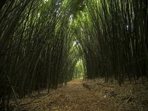 Linha de bambu floresta zenlike do passeio da natureza da espiritualidade da estrada foto de stock royalty free