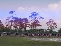 Linha de barraca colorida para a estada do turista com um fundo do pinheiro no parque nacional de Phukradueng, Loei, Tailândia fotos de stock royalty free