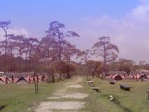 Linha de barraca colorida para a estada do turista com um fundo do pinheiro no parque nacional de Phukradueng, Loei, Tailândia fotografia de stock royalty free