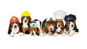 Linha de cachorrinhos em chapéus do trabalho Fotografia de Stock Royalty Free