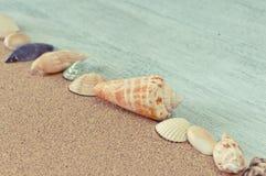 Linha de conchas do mar na areia da praia Fotografia de Stock Royalty Free