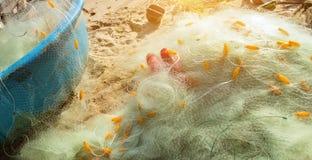 A linha de flutuador líquida de nylon da pesca uniu l barcos plásticos da cesta dos flutuadores fotos de stock