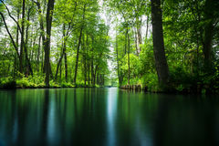 Linha de fluxo floresta da série perto de Berlim Fotografia de Stock