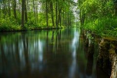 Linha de fluxo floresta da série perto de Berlim foto de stock