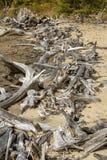 Linha de madeira lançada à costa descorada na praia do lago flagstaff, Maine fotos de stock