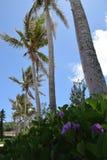 Linha de palmeiras imagem de stock royalty free