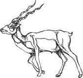Linha de passeio arte dos cervos ilustração royalty free