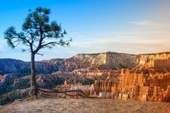 Linha de pináculos bonitos de Bryce Canyon National Park, Utá, Imagem de Stock