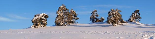 Linha de pinheiro Foto de Stock Royalty Free
