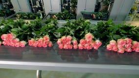 Linha de processamento da flor com as rosas recentemente cortadas video estoque