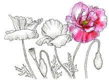 Linha desenho da tinta da flor ilustração stock