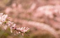 Linha diagonal da flor no tempo de mola com o fundo unfocused fotos de stock royalty free
