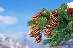 Linha do inverno com cones. Imagem de Stock Royalty Free