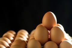 Linha do ovo sobre na bandeja fotos de stock royalty free