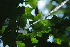 A linha dos grânulos de cristal pendura no parque fotografia de stock royalty free