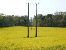 Linha elétrica no campo da colza usado para produzir a energia do biodiesel fotos de stock