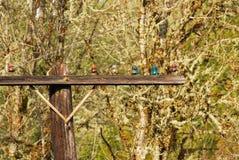 Linha elétrica velha nas madeiras imagem de stock