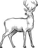 Linha ereta imagem do veado da arte ilustração royalty free