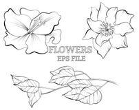 Linha esboço botânico tirado com flores ilustração royalty free