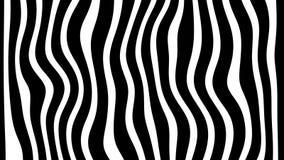 Linha fundo da animação do movimento da zebra dado laços ilustração stock