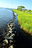 Linha gramínea da costa com barreira da rocha Fotografia de Stock