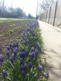 Linha infinita da flor Fotografia de Stock Royalty Free