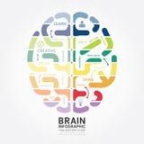 Linha molde do diagrama do projeto do cérebro do vetor de Infographics do estilo ilustração royalty free