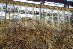 Linha produção do cana-de-açúcar foto de stock royalty free