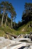 Linha selvagem da costa de oregon Fotografia de Stock Royalty Free