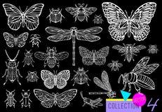 Linha tirada grupo da mão grande de erros dos insetos, besouros, abelhas do mel, traça da borboleta, zangão, vespa, libélula, gaf fotografia de stock