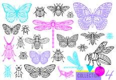 Linha tirada grupo da mão grande de erros dos insetos, besouros, abelhas do mel, traça da borboleta, zangão, vespa, libélula, gaf fotos de stock