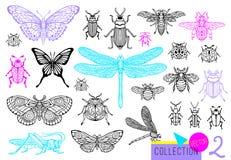 Linha tirada grupo da mão grande de erros dos insetos, besouros, abelhas do mel, traça da borboleta, zangão, vespa, libélula, gaf foto de stock