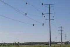 Linha trabalhadores do fio alto imagens de stock