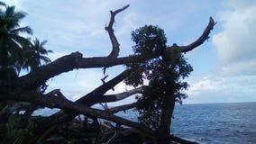 Linha tropical da costa Imagem de Stock Royalty Free