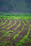 Linha Verde Foto de Stock Royalty Free