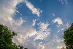 Linha verde da parte superior da árvore sobre o fundo do céu azul e das nuvens no summe fotografia de stock