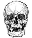 Linha vetor do desenho do crânio do trabalho ilustração stock